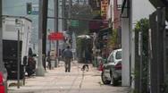 A man walks his dog. Stock Footage