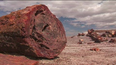 The remains of a petrified tree in the Arizona Petrified Stock Footage