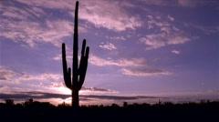 Saguaro Cactus Sunset 480x270 Stock Footage