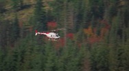 A helicopter flies over a pine forest at Mt. St. Helens Stock Footage