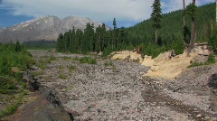 A dry riverbed cuts through a pine forest at Mt. St. Helens Stock Footage