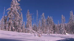 Pan across a snowscape with winter trees covered in snow. Stock Footage