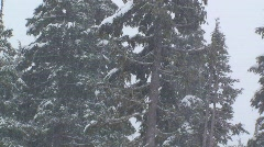 Heavy snow falls in a forest. Stock Footage