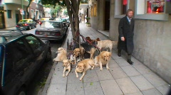Pets are tied up on leashes on street in Buenos Aires Stock Footage