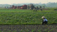 A woman works in the fields with some graves in the background. Stock Footage