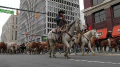 Man on a horse leading bulls through a city street. Stock Footage