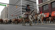 Stock Video Footage of Man on a horse leading bulls through a city street.