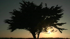 A tree is silhouetted at golden hour. Stock Footage