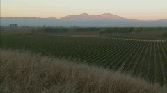 A slow pan across a vineyard in Monterey County, California. Stock Footage