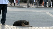 Stock Video Footage of Time lapse of a dog sleeping on the Alameda, on of the