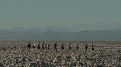 Tourists at the Laguna Chaxa at the Salar de Atacama in the Stock Footage