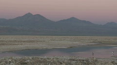 Pan across the flamingo habitat of Laguna Chaxa at the Stock Footage