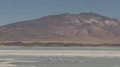 Flamingos in the Salar de Laco in the altiplano high above Stock Footage