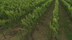 Pan up over a Monterey County vineyard, California - stock footage