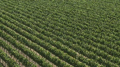 A vertical pan over a vineyard in the Salinas Valley wine - stock footage