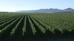 Wine blows through a vineyard in the Salinas Valley wine Stock Footage