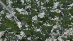 Sprinklers irrigate a field of broccoli in the Salinas Stock Footage