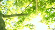 Bright green tree leaves glisten in the sunlight. Stock Footage