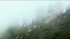 Fog rolls over a densely forested hillside in the California mountains. Stock Footage