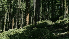 Trees cast shadows in time lapse in a forest. Stock Footage