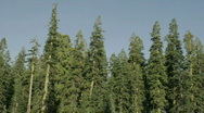 Shadows stretch over a stand of trees. Stock Footage