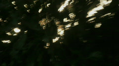 The sun filtering through treetops vibrates. Stock Footage