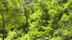With inside the rainforest to a canopy of trees on  a ridge - stock footage