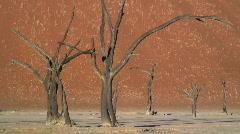 Dead Vlei, Namib Desert, Namibia, Stock Footage
