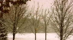 Dismal Winter Storm in Park Stock Footage