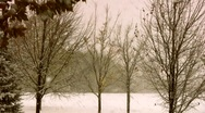 Stock Video Footage of Dismal Winter Storm in Park