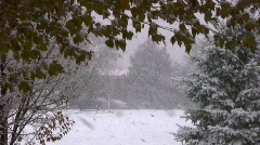 First Winter Storm in Park Stock Footage