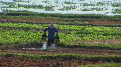 A Vietnamese farmer waters fields using traditional methods. - stock footage