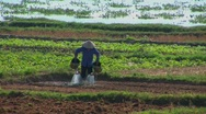 A Vietnamese farmer waters fields using traditional methods. Stock Footage