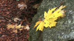 A leaf sits on a rock in a forest, suggesting fall. Stock Footage