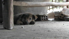 A sleepy puppy Stock Footage
