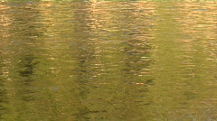 Water flows down a stream in a golden light. Stock Footage