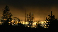 Stock Video Footage of Trees both burned and unburned stand in silhouette after a