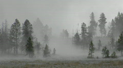 Fog drifts amongst trees at Yellowstone National Park. Stock Footage
