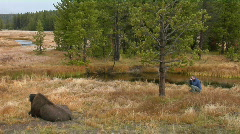 A man photographs a bison at Yellowstone National Park. Stock Footage