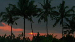 Palm trees stand high in the orange and red sky. Stock Footage