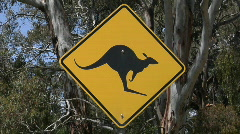 A kangaroo cross road sign stand near trees. Stock Footage