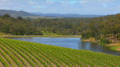 Grapes grow in the vineyards of Victoria, Australia. Stock Footage