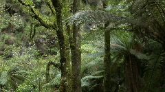 A small waterfall pours over a cliff in a jungle. Stock Footage