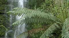 Ferns grow in a rain-forest with a waterfall in the background. Stock Footage