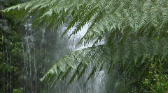 Ferns grow in a rain forest with a waterfall in the background. Stock Footage