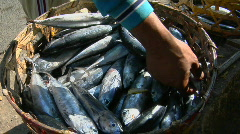 A man displays baskets of fresh fish on the side of a road. Stock Footage