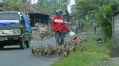 A man herds a gaggle of geese down a road in a small village. Stock Footage