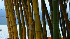 A bamboo forest reveals a Asian temple on lake Bratan, Stock Footage