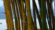 Stock Video Footage of A bamboo forest reveals a Asian temple on lake Bratan,