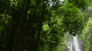 A moving shot through jungle reveals a tropical waterfall. Stock Footage